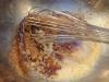 paleo-coconut-madeleines-005