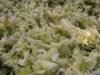 paleo-coleslaw-007