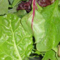 Leafy Greens… Tasty!